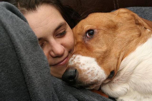 Basset Hound Pet